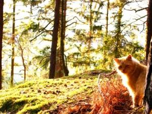 Tierfreunde Österreich Haustierabschussverbot