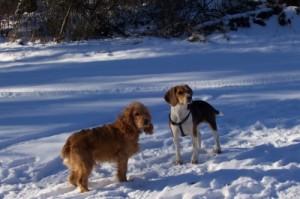 Betreuung durch den Haustier-Schutzbrief der TIERFREUNDE ÖSTERREICH