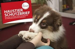 Der Haustier-Schutzbrief der Tierfreunde Österreich