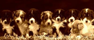 Beliebte Hundenamen für Welpen