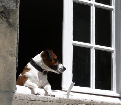 Expertenrat: Haustiere und Mietwohnungen