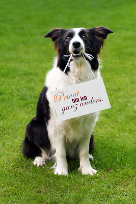 Hundehaftpflichtversicherung für Hunde