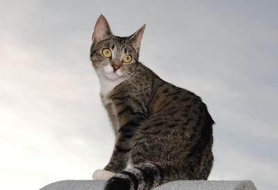 Katzenbetreuung im Notfall