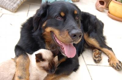 Die Tierfreunde Österreich - Der Verein für alle Haustierhalter