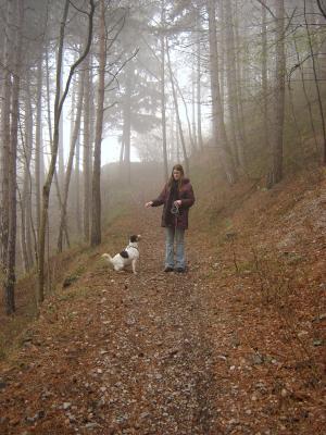 Abendspaziergänge im Herbst bei Nebel und schlechter Sicht könne Durchaus Gefahren für Hund und Hundehalter mit sich bringen