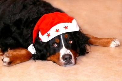 haustiere-weihnachten-leckerlies