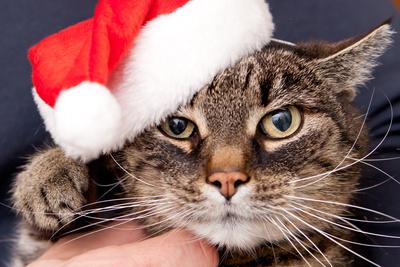 haustiere-weihnachtsgeschenke-weihnachten