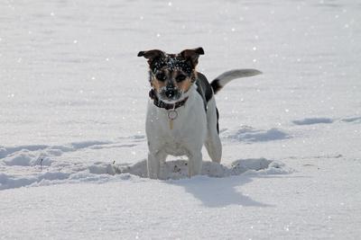 hund-haustiere-winter