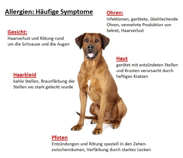 Allergien-Hunde-Symptome