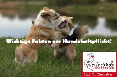 hund-versicherung-hundehaftpflichtversicherung