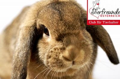 Kaninchen-Nager-Kleintiere
