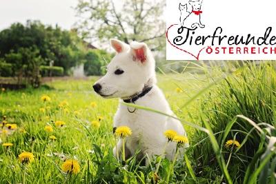 Hunde-Haustiere-Gesundheit