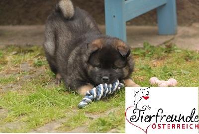 Hunde-Hundehaftpflicht-Versicherung