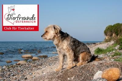 Hunde-Urlaub-Bibione