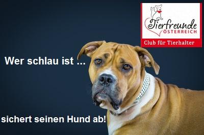 Hund-Versicherung-Haftpflicht