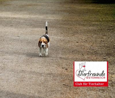 Hund-entlaufen-vermisst