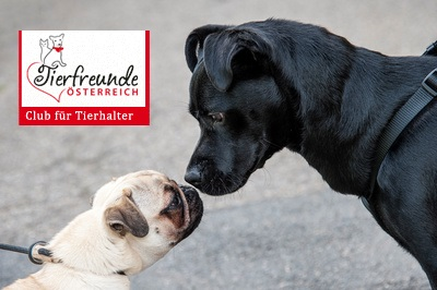 Hunde-Hundeschule-Ratgeber