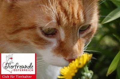 Katzen-Globuli-Gesundheit