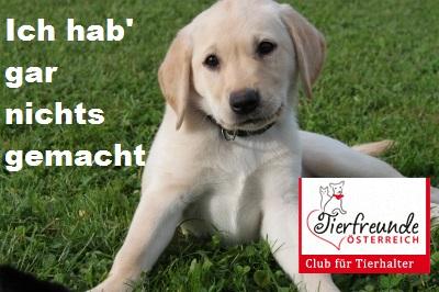 hunde-hundehaftpflichtversicherung-günstig