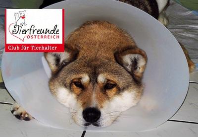 Hund-krank-versicherung