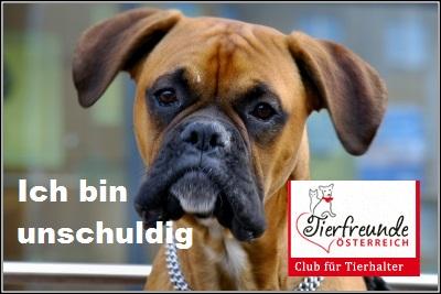 hund-versicherung-unfall