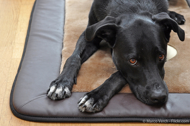 Hundedecke-Hunde-Rückzugsort