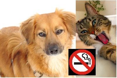 haustiere-rauchen-gesundheit