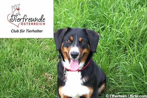 Unterstützung für Tierfreunde und ihre Haustiere – die gibt es bei den Tierfreunden Österreich.