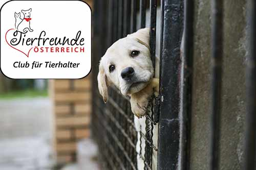 Nie wieder bangen um das Haustier – mit dem Fortlauf-Schutz!