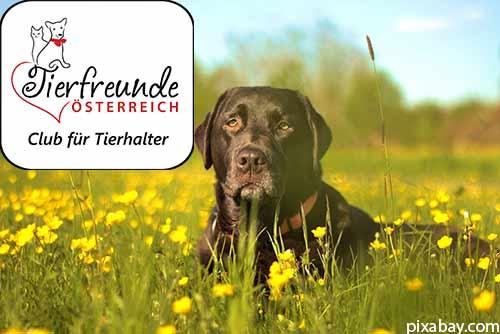 Mitglied bei den Tierfreunden Österreich werden? Eine gute Idee!