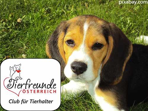 Aufpassen vor Hundedieben im Ausland! Das empfehlen wir dringend.