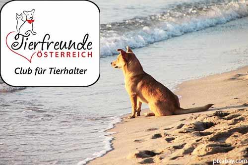 Mit dem Hund ans Meer... in Italien geht das wunderbar!