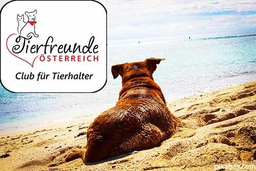 Mit dem Hund den Strand erobern: Herrlich!