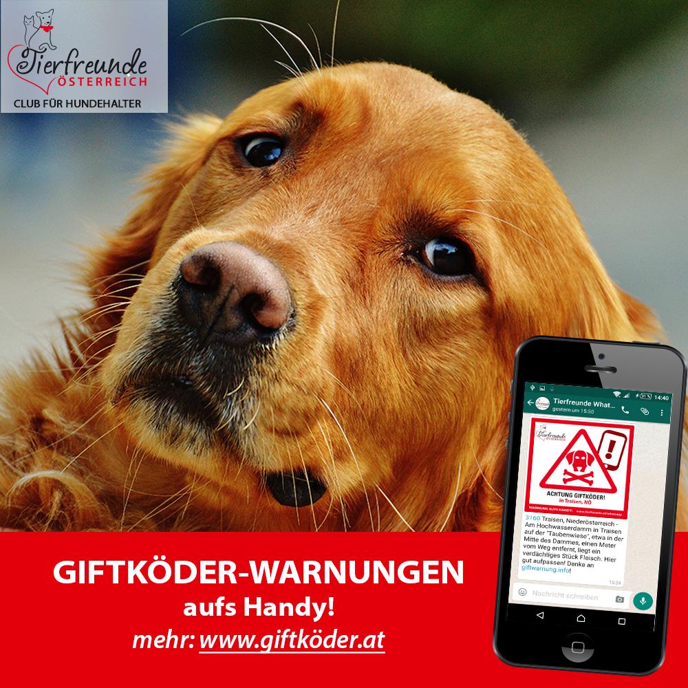 Schütze deinen Hund und sei mit unserem Whatsapp-Dienst immer über aktuelle Giftköder informiert!