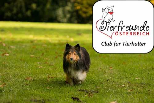 """Hunde brauchen Raum, an dem sie Freiheit genießen können und einfach mal """"Hund"""" sind. Wir setzen uns für mehr Hundewiesen in Österreich ein."""