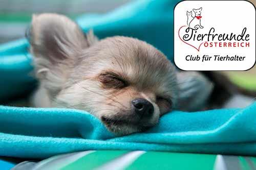Dein Hund ist müde und schlapp? Das könnte an einer Erkältung liegen.