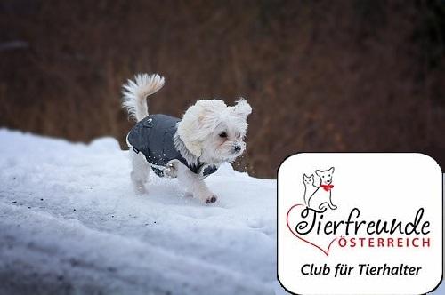 Spaziergänge im Schnee machen Spaß!