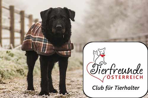 Jacken oder Decken für den Hund? Oftmals, aber nicht immer überflüssig.