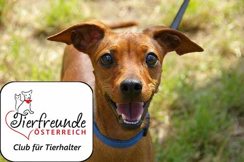 Die Mitgliedschaft bei den Tierfreunden Österreich lohnt sich für Haustierhalter gewaltig!