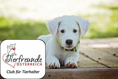 Der Wunsch nach einem Hund kann sehr groß werden. Wir erklären, was bei der Hundeanschaffung zu beachten ist.
