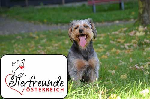 Andrea Schneider* ist überglücklich ihren geliebten Felix durch den Fortlaufschutz schnell wiederbekommen zu haben.