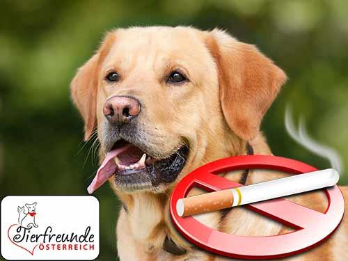 Auch Hund, Katze und Co. leiden durch Zigarettenrauch.