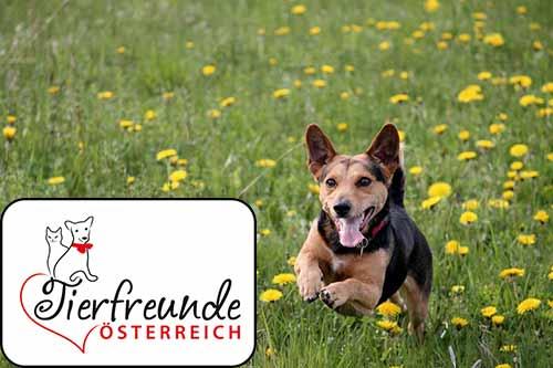 Ein Tierfreund Österreich zu werden lohnt sich – für dich und deinen Liebling!