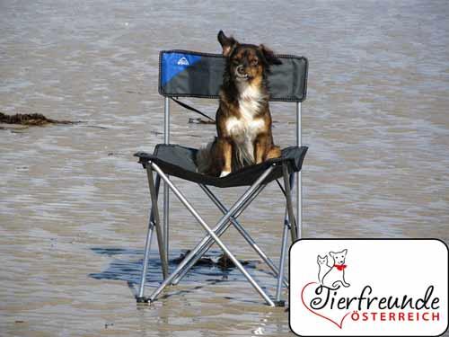 Camping-mit-Hund