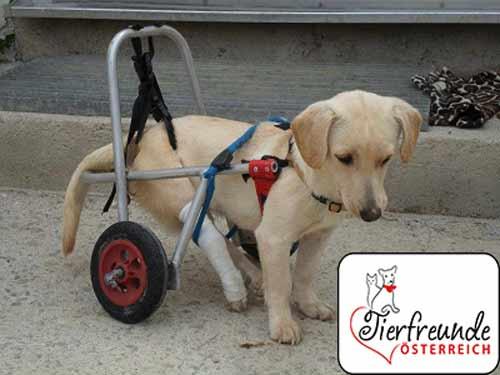 Tiere-mit-handicap