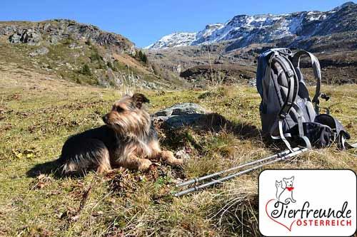 Wandern-mit-Hund