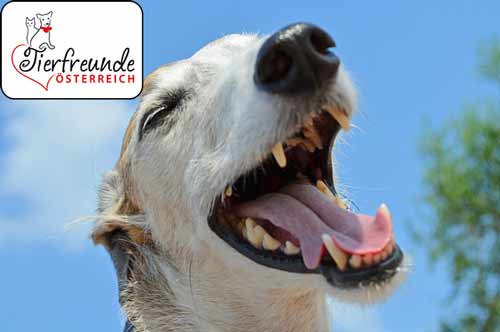 Zahnpflege-Hunde