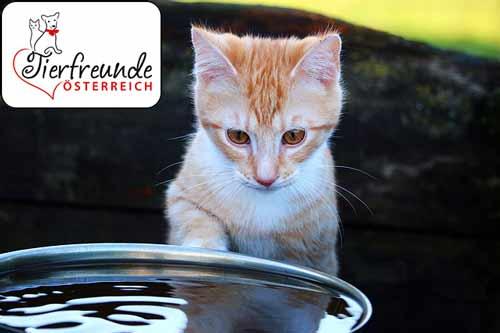 Katzen-wasserscheu