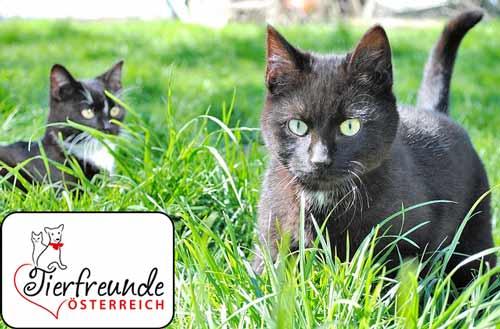 Orientierungssinn-Katzen