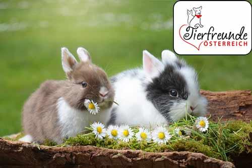 Kaninchen-kein-Ostergeschenk
